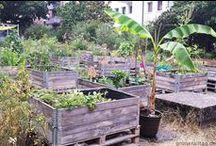 Gärtnern & Ernten // Gardening & Harvesting / Tipps für einen nachhaltigen Garten, Balkon und Ernte - Tips for a sustainable garden, balcony and harvest