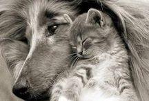 Sleepy and Cuddling Animals