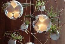 Terrariums, miniature gardens, and succulents