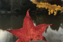 fall'inlove