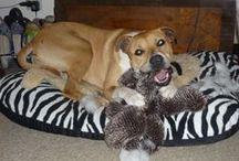 I love doggies / Puppy pics