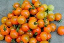 Tomatoes & Peppers / List of varieties updated for 2015