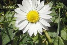 Mů herbář / Flowers