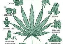 Rongoa Tauiwi...  Ngaki taru / Medical marijuana .... Hemp...