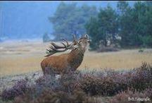 natuur / De natuur door het oog van een camera.