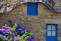 Fleurs et Jardins / Jardinage et aménagement extérieur