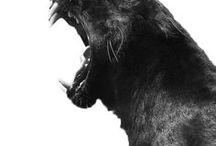 Wildlife / Animals