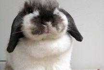 Cute Bunny Pics
