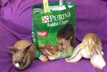 Bunny Store