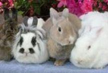 Bunny Education