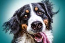 PhoShoot: Dogs/Animals