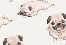 Pugs & Puppies