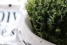 NTRLK HERBS & EDIBLE PLANTS / Green kitchen