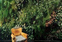 NTRLK GREEN WALLS / Plants on wall
