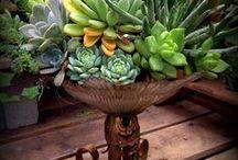 Succulent / Kytky