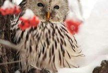 Animals!!!! / That cute little animal!!
