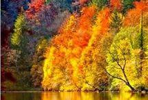 Fall / Podzim