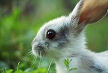 Rabbits / Králíčci a zajíčci