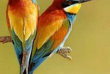 Bird / Ptáci,budky