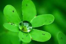 Green / Barvy