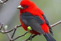 BIRDS / SYMBOL RELATED TO MY heART LOGO