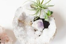 DIY – Air Plants / Tillandsien