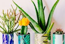 DIY – Pflanzen / Kreative DIY Ideen rund um Pflanzen zum Selbermachen - egal ob Planter, Pflanztöpfe oder Ideen mit Blättern und Pflanzen, Hauptsache grüne kreative DIY Ideen