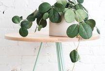 Interior – Deko mit Pflanzen