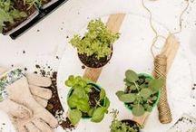 DIY – Pflanzen: Säen und Pflege