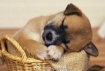 Zzz...Sleep tight