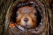 Squirrel addict