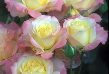 """Gorgeous Blooms / """"I just have to look at my surroundings to know that the earth is fighting tooth and nail to give us the best that she has to offer. Beautiful flowers and trees pregnant with delicious fruits are there to prove it."""" - Dr. Carolle (http://www.drcarolle.com/)"""