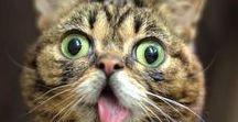 Funny cats ... dogs ... funny pets ... Bichos engraçados .