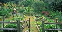 kitchen gardens / kitchen gardens, summer days, hazy evenings...