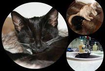 Vores katte