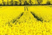 Colour   Sunshine Yellow