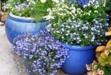 Gardens   Potty Ideas