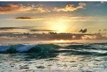 Nature   Beach Life / Life on a beach; pure bliss!