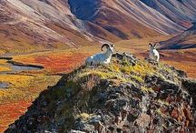 Nature   National Parks
