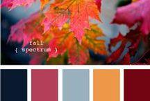 Color /  Сочетания цветов в природе