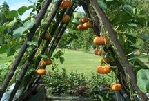 ~Indoor & Outdoor Gardening~ / All sorts of Wonderful gardening idea's / by Lisa