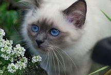 Cats/Katten (1)