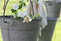 Lente/ Spring Time (1) / Lentekriebels