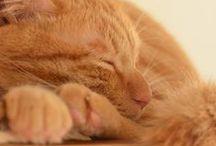 Cats : orange (3)