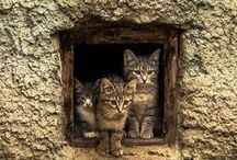 Cats : In  window (2)