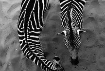 Africa & Animals