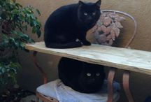 Walker & Texas Ranger / My Cats and other animals