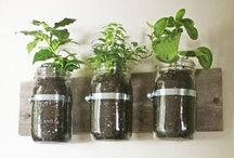 nourished projects / DIY and creative projects  / by Nourish Medicine - Alejandra Carrasco, M.D.