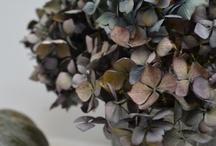 Flower Inspiration for Mosaics
