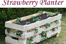 Vers uit eigen tuin / Groente uit eigen tuin...heerlijk om te zaaien, oogsten en te zien groeien. Check hier je tips en zaaikalender.